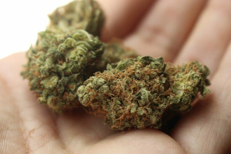 Marijuana or Weed