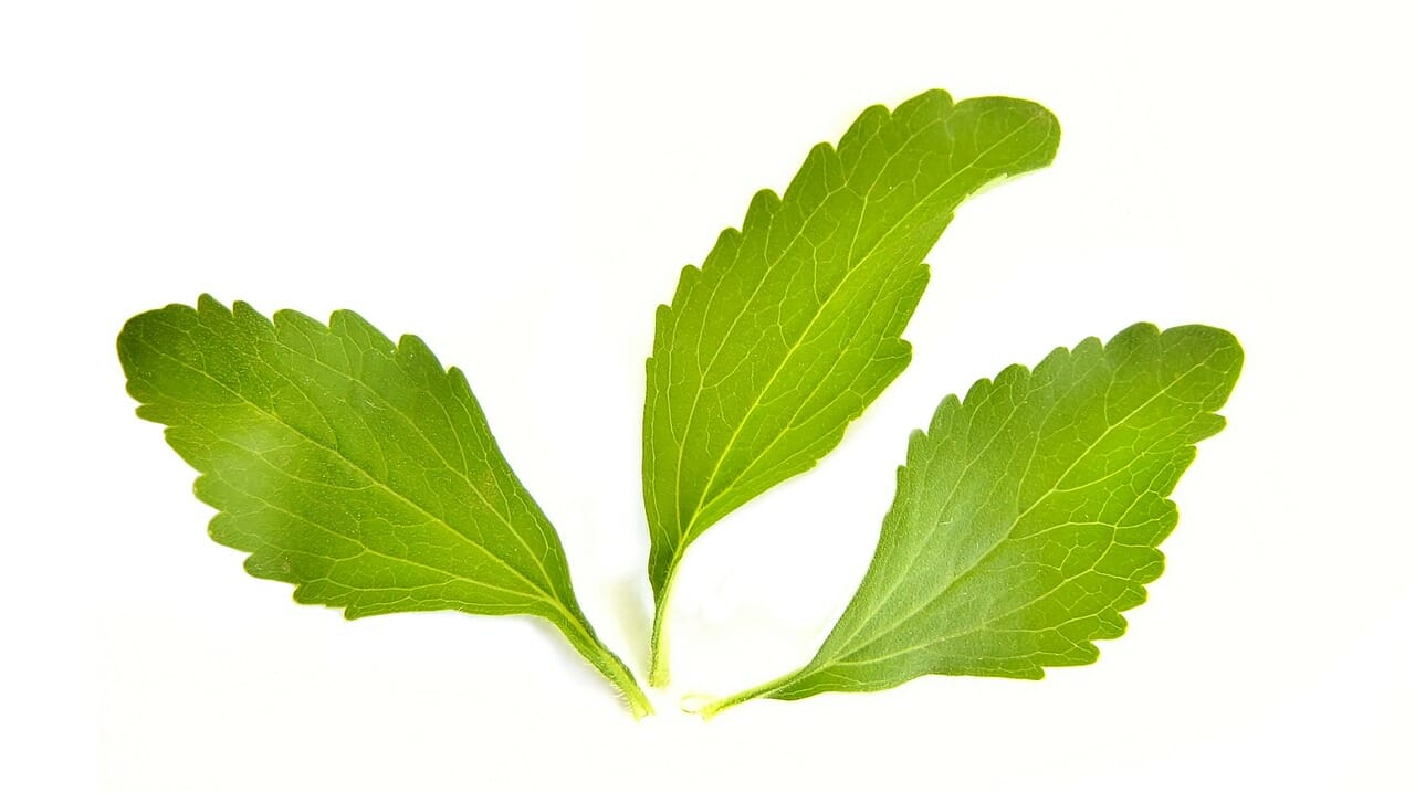 The Stevia plant is native to Brazil and Paraguay