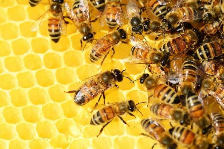 Honey is a natural and nutritive sweetener.