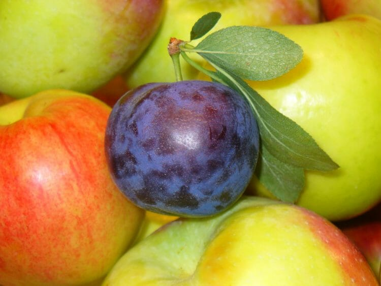 Prunes and Apples are natural sources of Sorbitol
