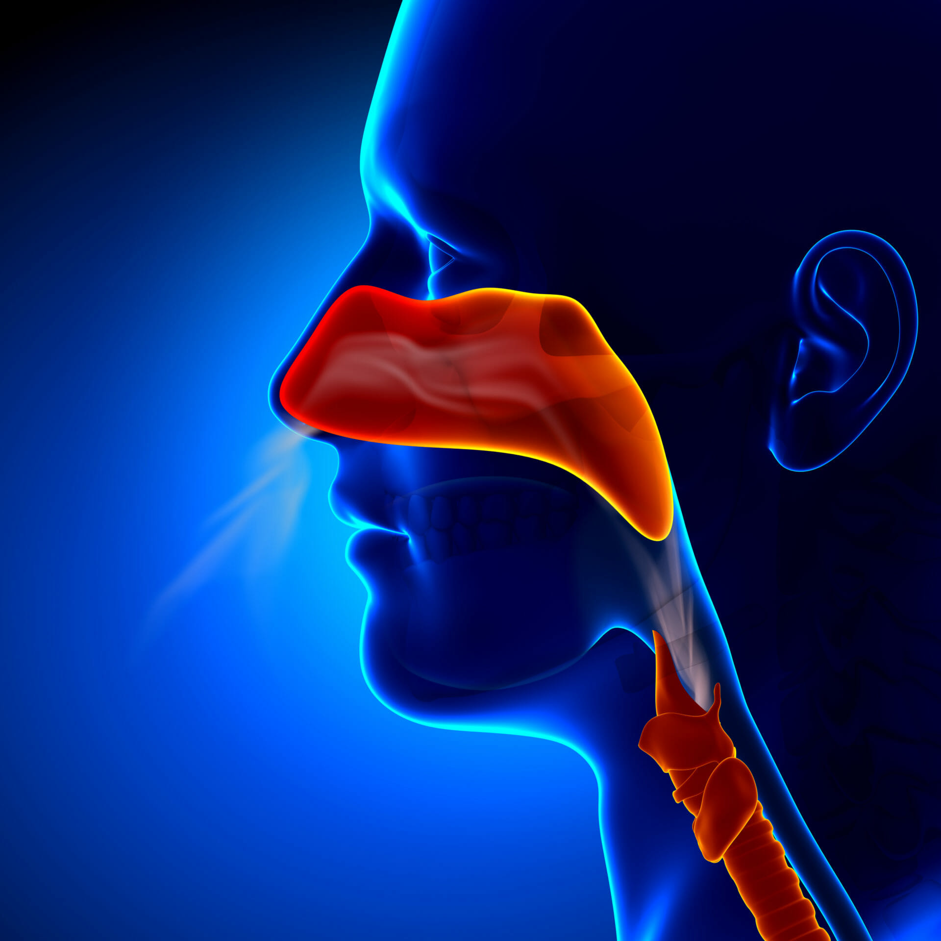 The benefits of nose breathing